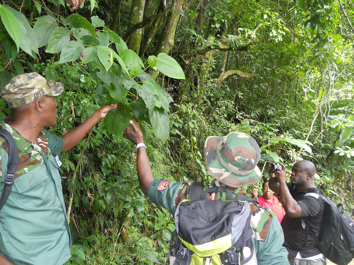 JCDT - National Park Rangers show tree used by endemic Giant Swallowtail Butterfly caterpillars
