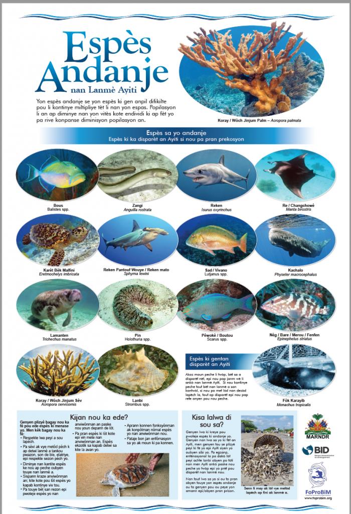 Haiti's endangered marine fauna